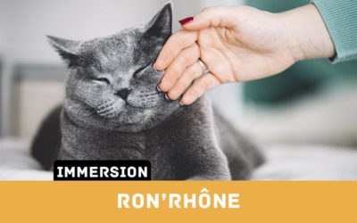 Immersion RonRhone Miniature AssoDiscovery